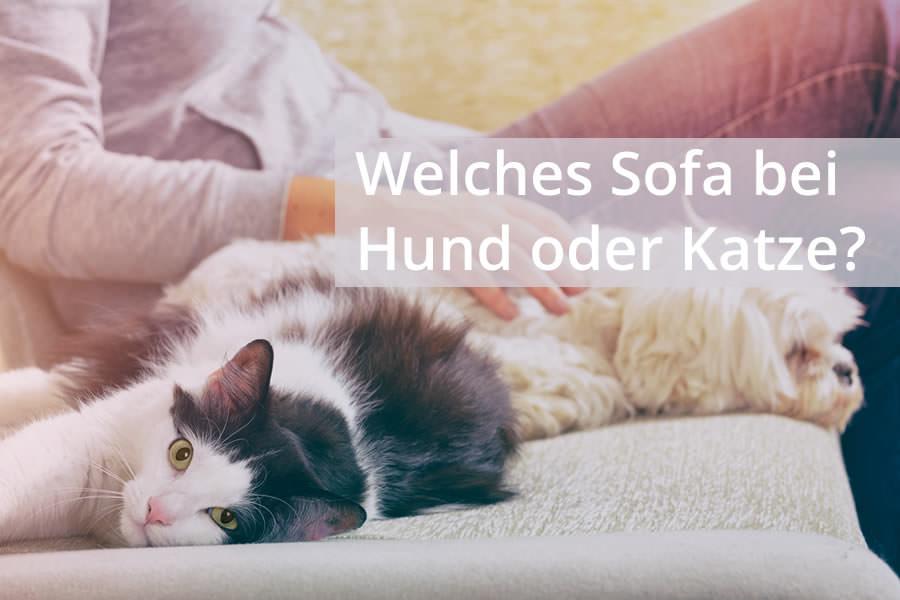 Sofas Für Hunde Und Katzenhalter Tipps Für Den Kauf Ratgeber
